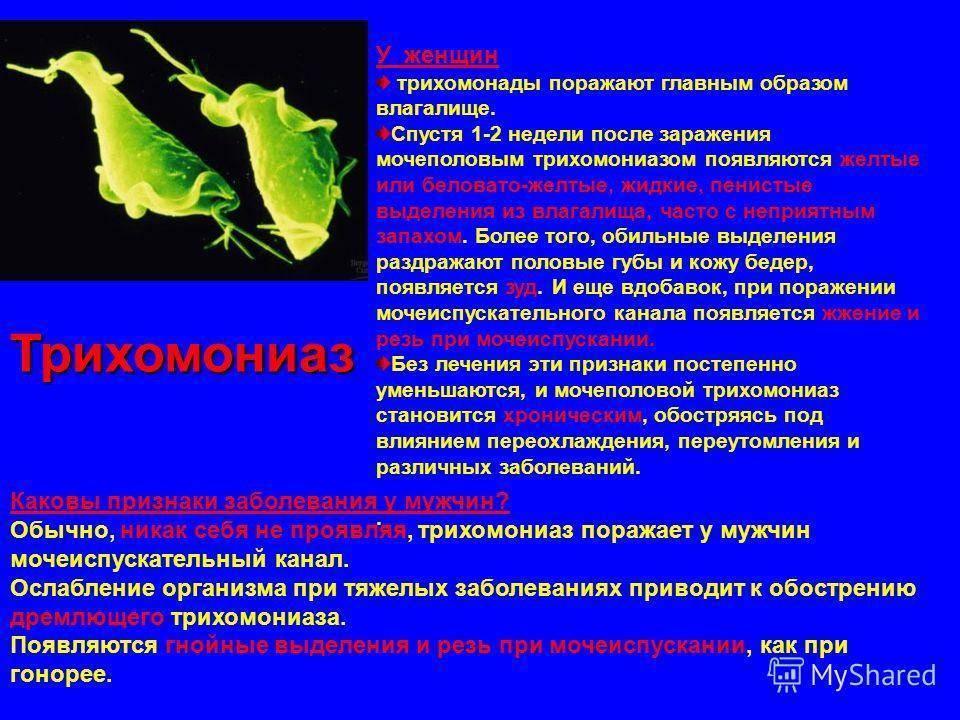 Симптомы, признаки трихомониаза у женщин и мужчин. как лечить трихомоноз