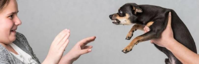 Кинофобия: как проявляется боязнь собак и как с ней бороться?