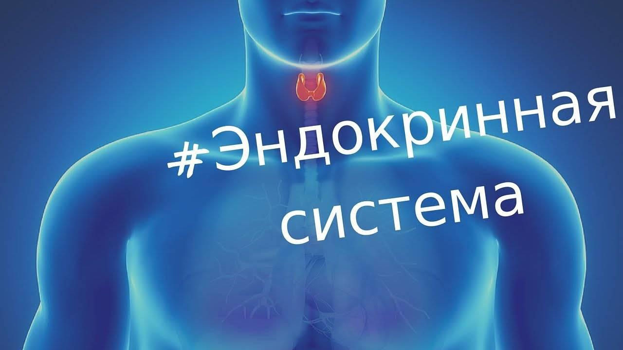 Эндокринная система, её строение, железы, гормоны и функции
