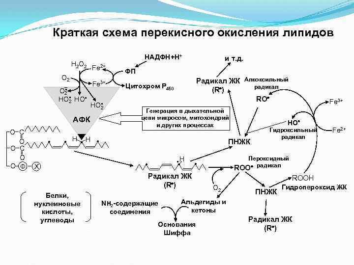 В результате какого процесса в клетке синтезируются липиды