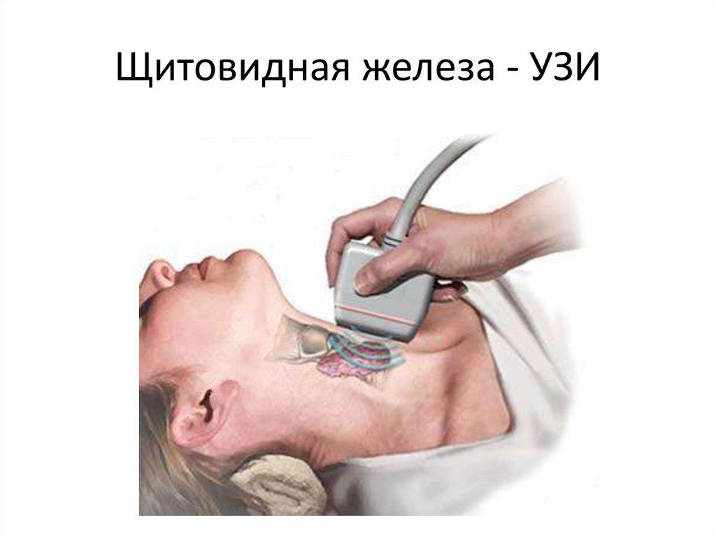 Узи щитовидной железы - подготовка, что показывает, какова норма?