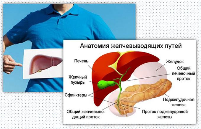 роль желчного пузыря в организме человека