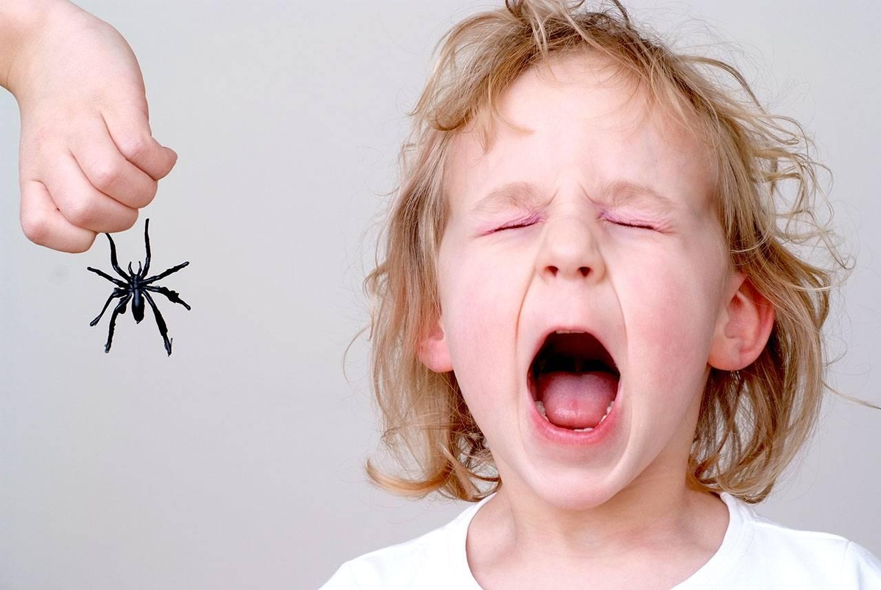 Инсектофобия - страх перед насекомыми