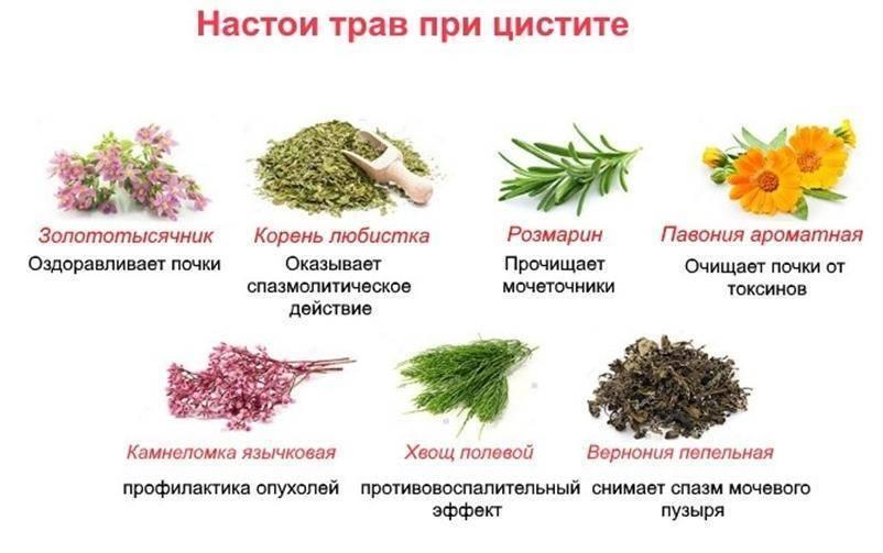 Диета при цистите у женщин: список продуктов, особенности и рекомендации специалистов