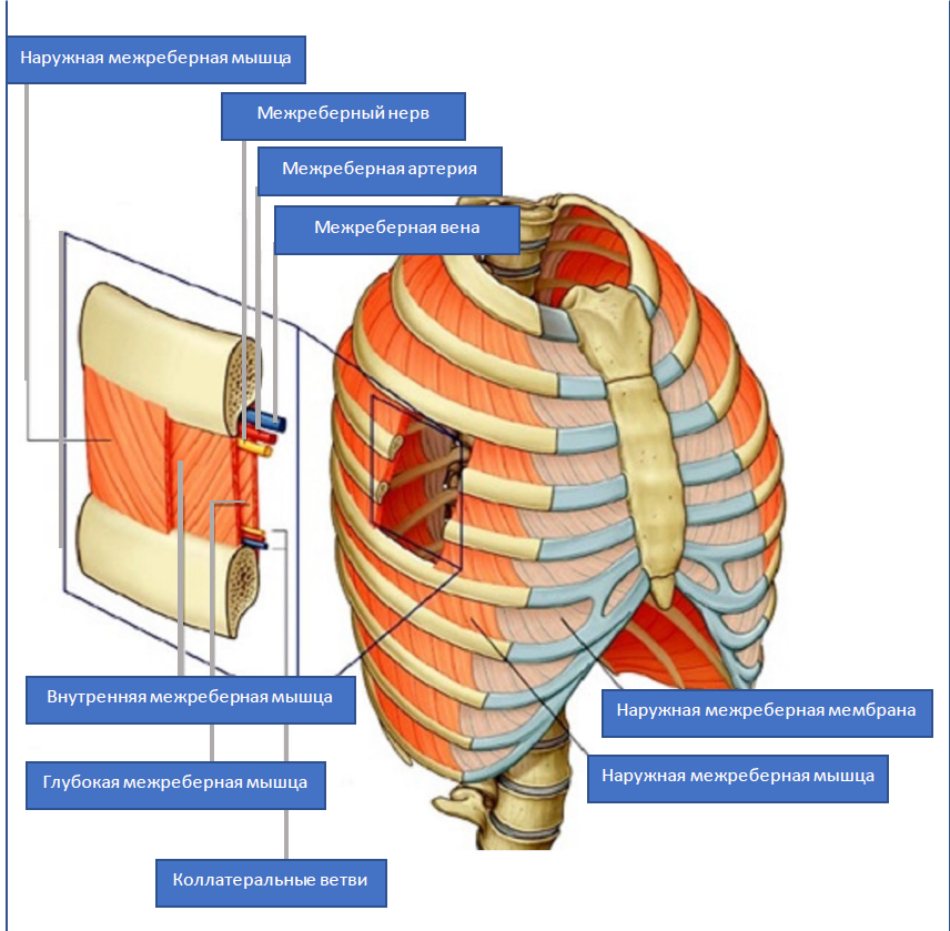 как лечить невралгию грудной клетки
