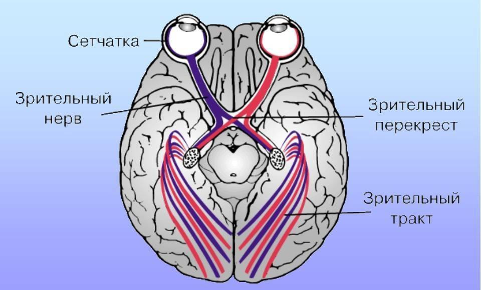 лечение зрительного нерва