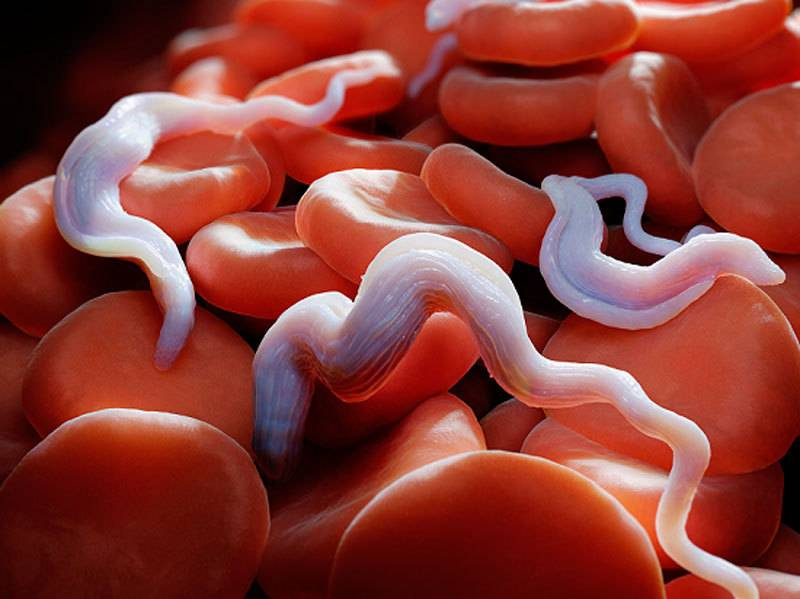 глисты в крови