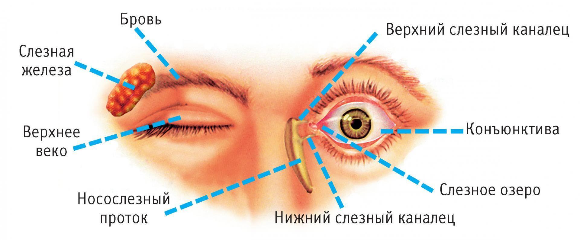 Где находится конъюнктивальный мешок глаза - лечение заболеваний