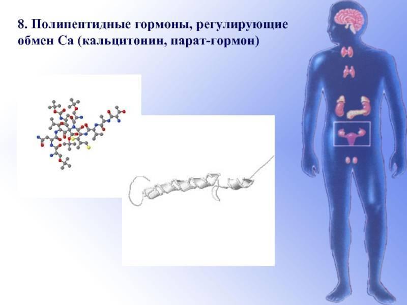 тиреокальцитонин гормон