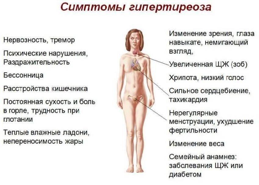 на что влияет щитовидная железа у женщин