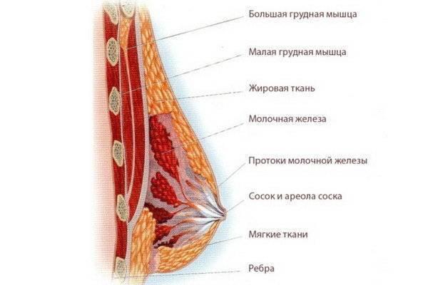 У мужчины болит левая грудь выше соска