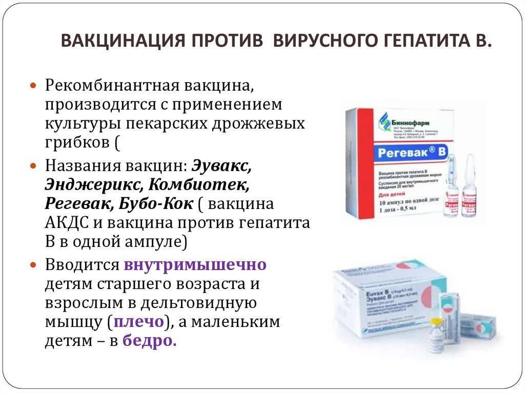 Вакцина против гепатита а взрослым: инструкция, показания, противопоказания и побочные эффекты
