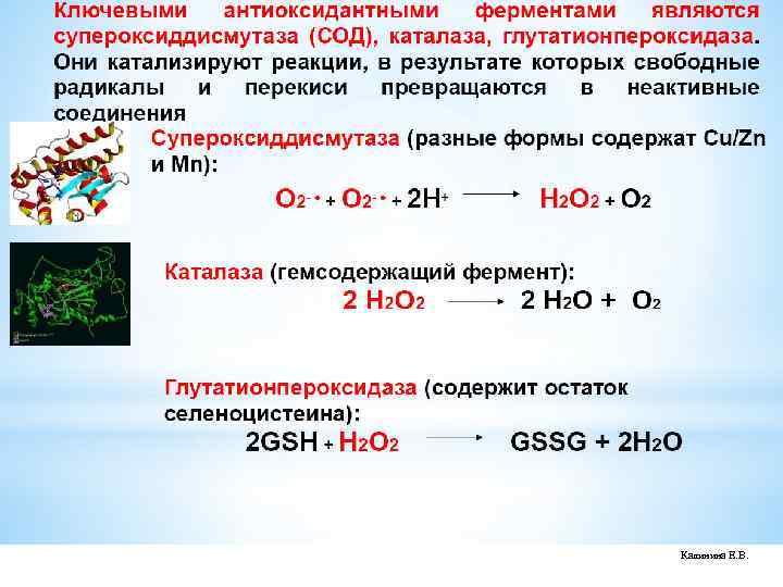 окисление липидов мембраны