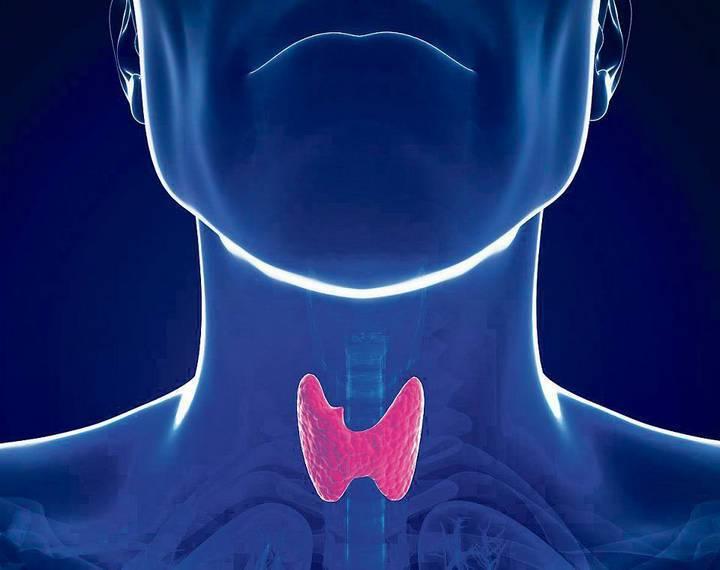 границы щитовидной железы