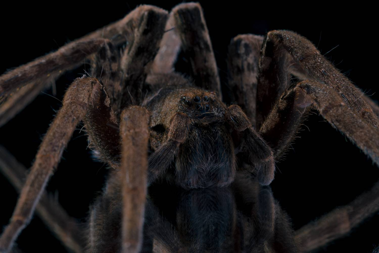 Арахнофобия (боязнь пауков) - причины, лечение