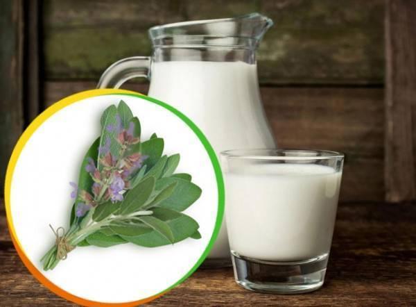 молоко с шалфеем от кашля