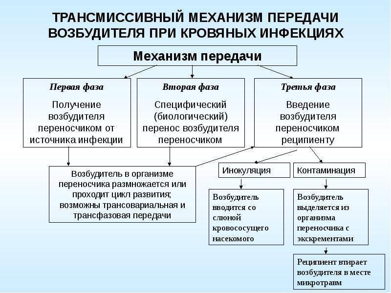 """Путь и механизм передачи инфекции. что такое """"механизм передачи возбудителя инфекции""""?"""