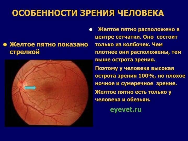 Боковое зрение