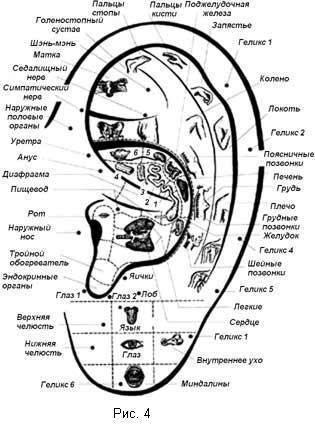 Ушная раковина точки отвечающие за органы