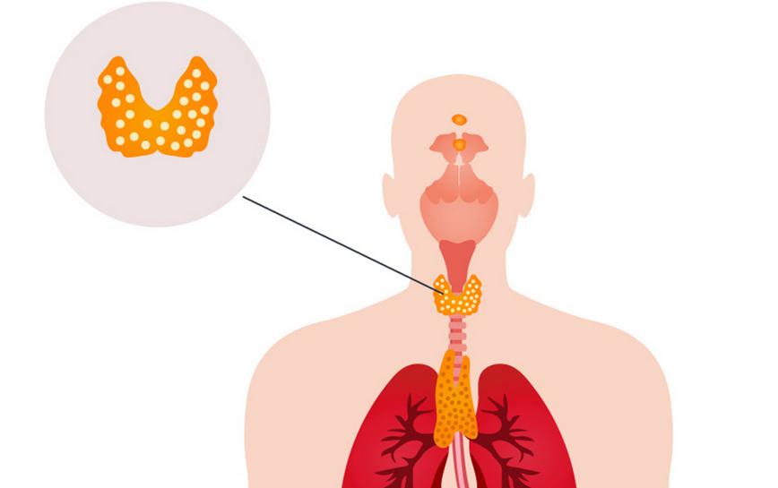щитовидная железа и психические расстройства