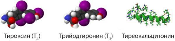 Почему может быть понижен тироксин и как повысить его уровень