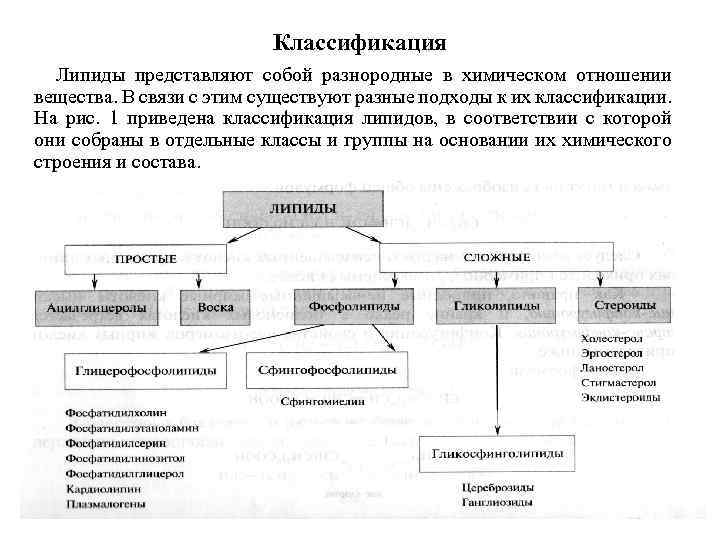 Особенности разных видов липидных соединений и их функции