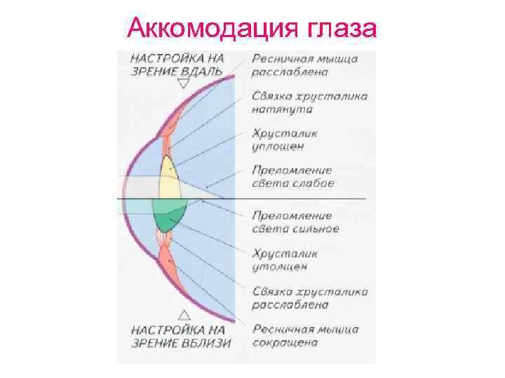 физиологические механизмы аккомодации глаза