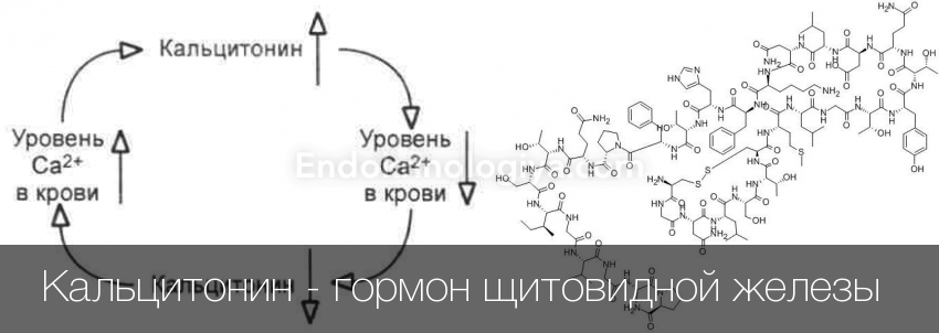 Кальцитонин: норма, отклонения, функции гормона