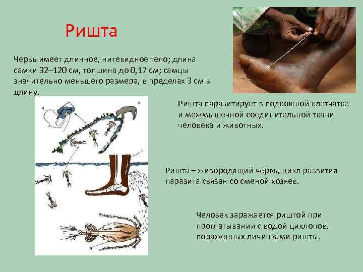 Ришта - гвинейский дракон