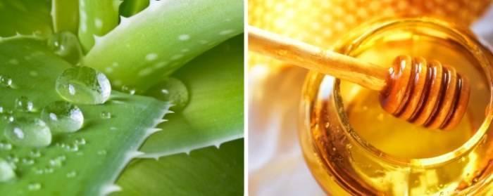 Алоэ с медом: правила приготовления для лечения простуды и кашля