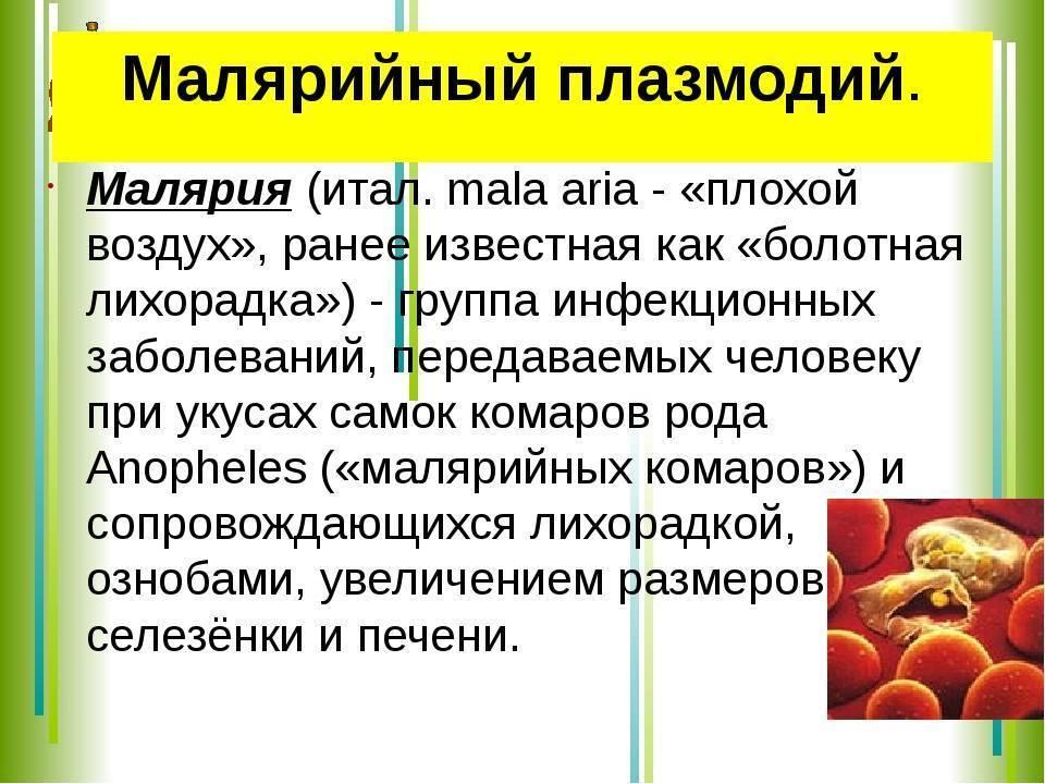 Основной хозяин малярийного плазмодия. жизненный цикл и размножение малярийного плазмодия