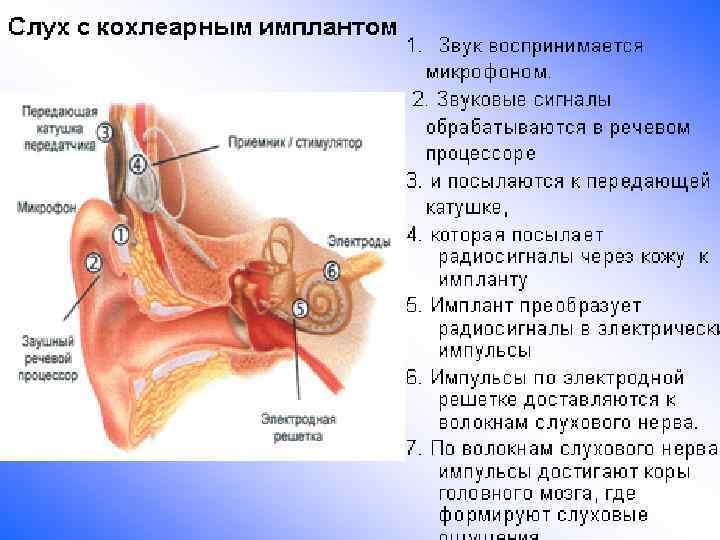 Симптомы и лечение воспаления внутреннего уха у взрослых и детей