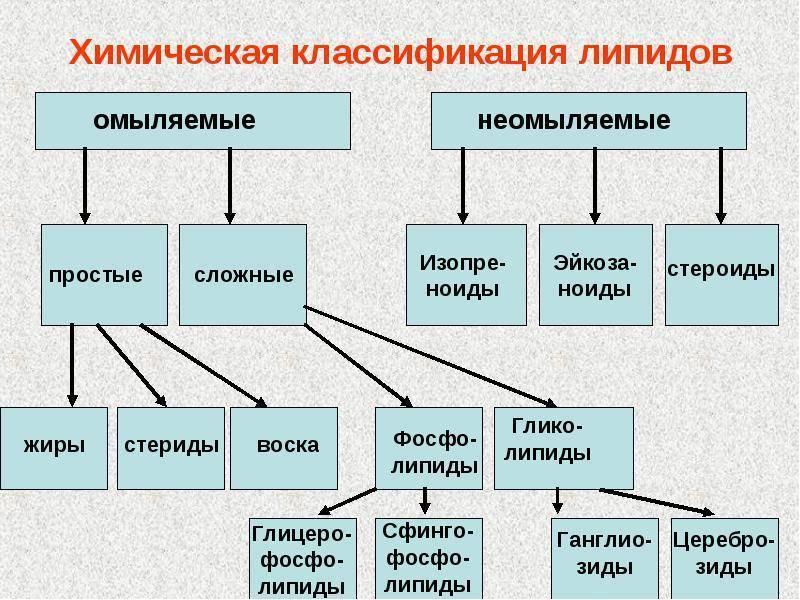 Липидный обмен — википедия. что такое липидный обмен