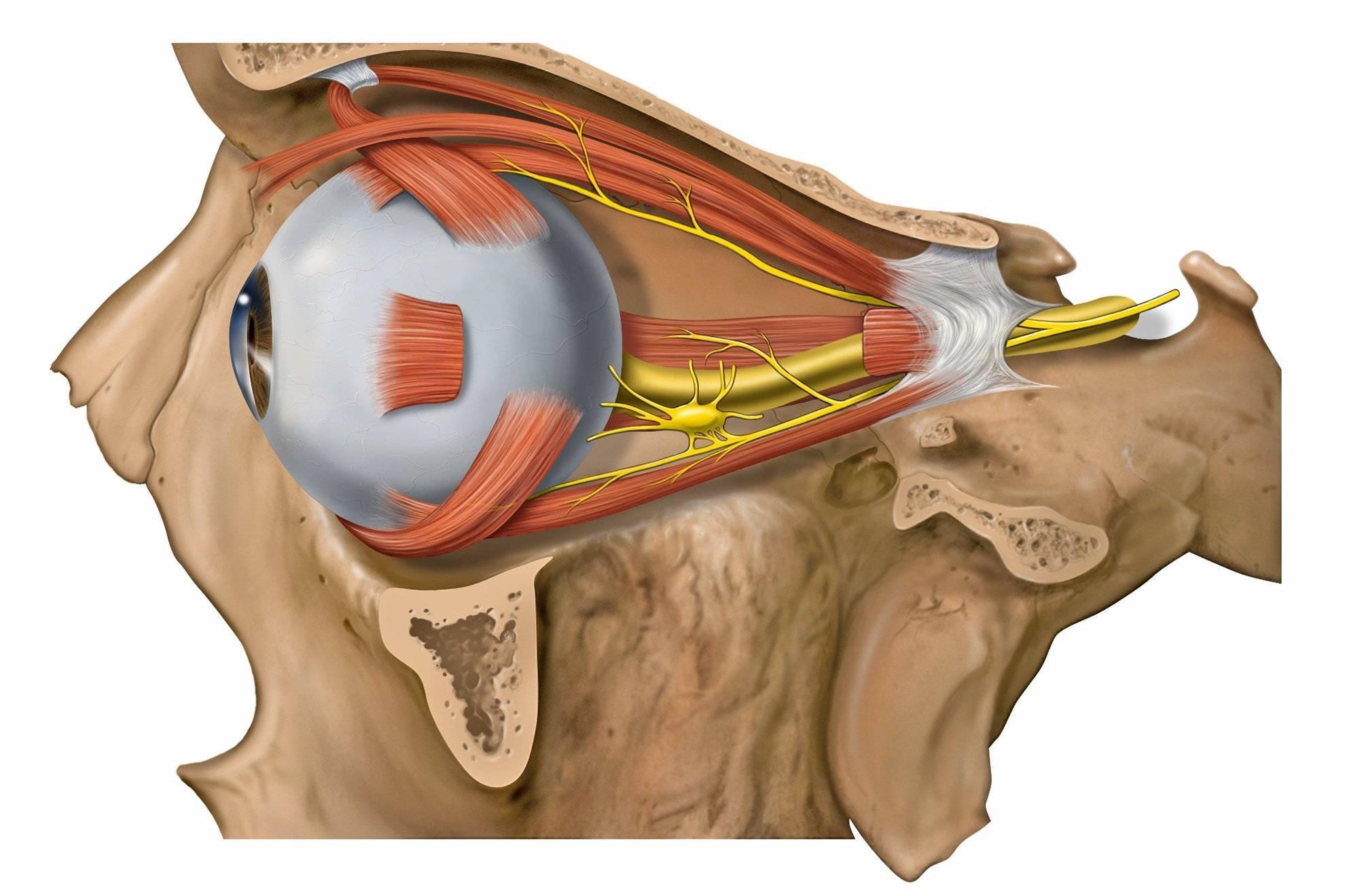 Выявление и лечение различных видов неврита зрительного нерва