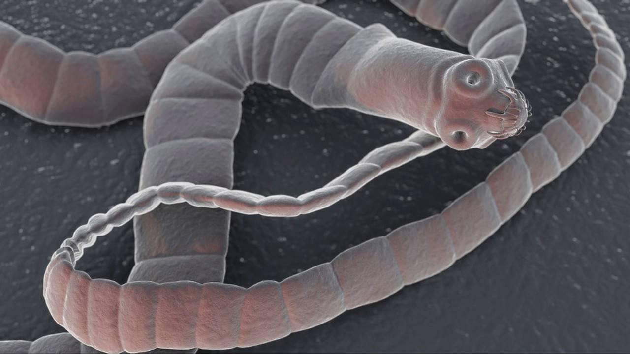 Как глисты влияют на организм человека?