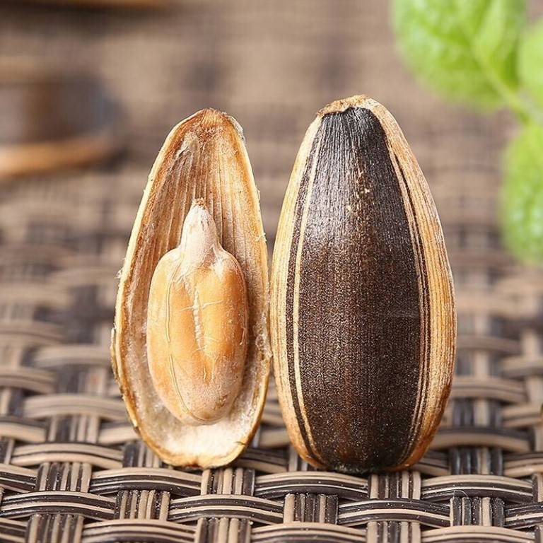 Сколько холестерина в семечках подсолнуха