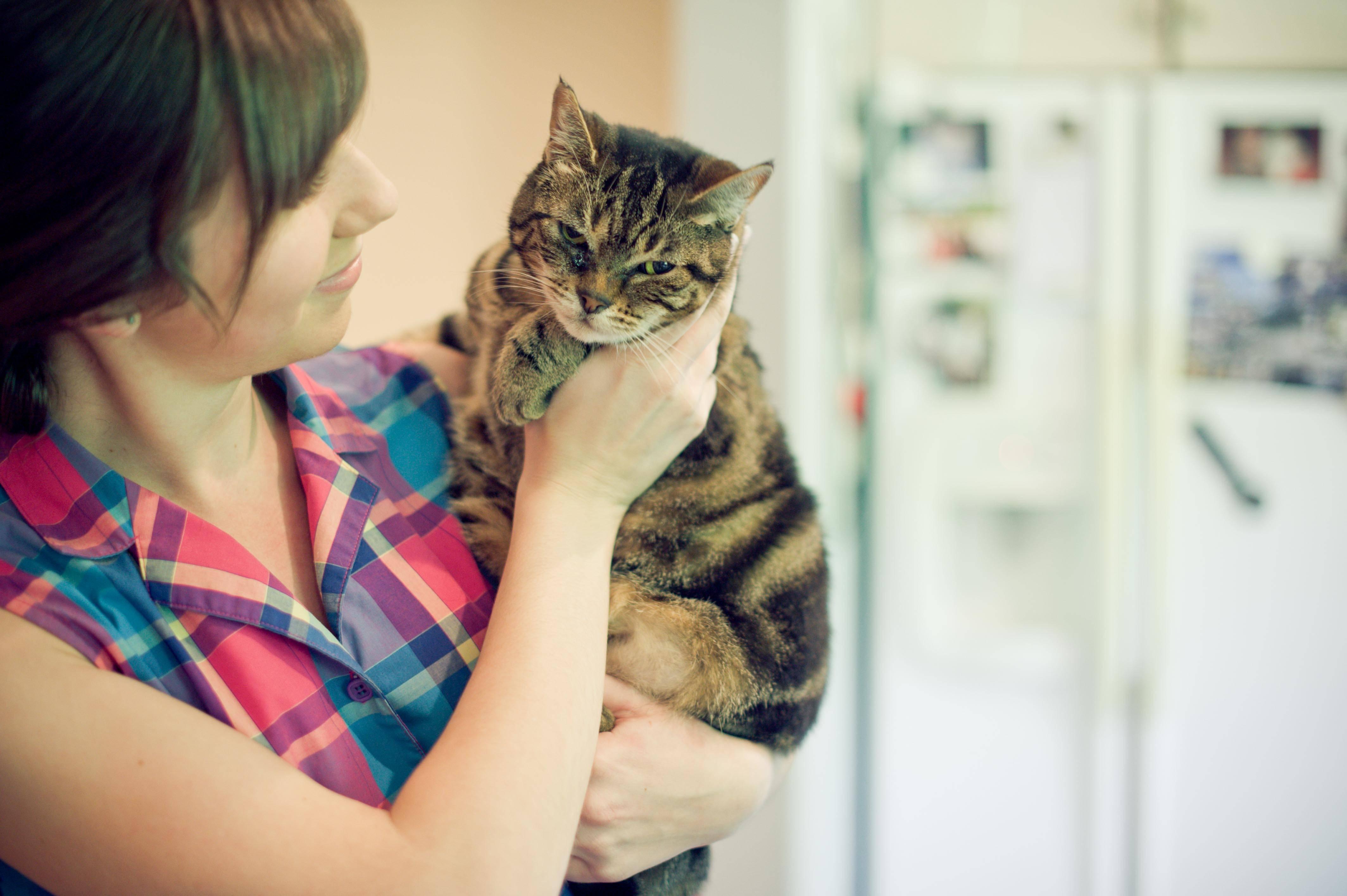 Зоофобия – страх перед животными – причины и лечение.