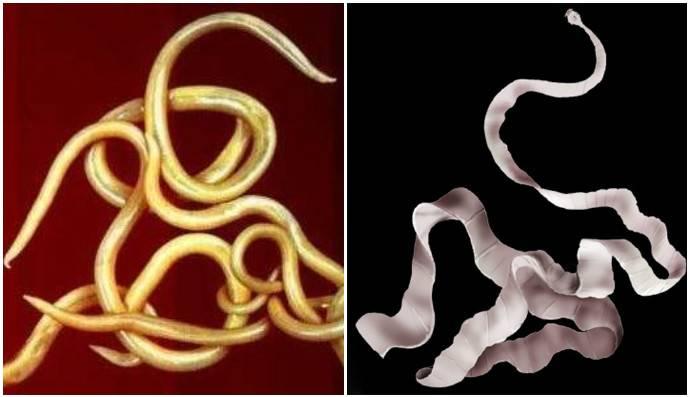 Как вывести паразитов из организма в домашних условиях - народные средства и медикаменты для детей и взрослых
