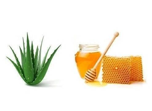 Правильное применение алоэ с медом спасает от кашля