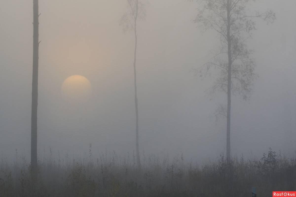 Если туман перед глазами что болит