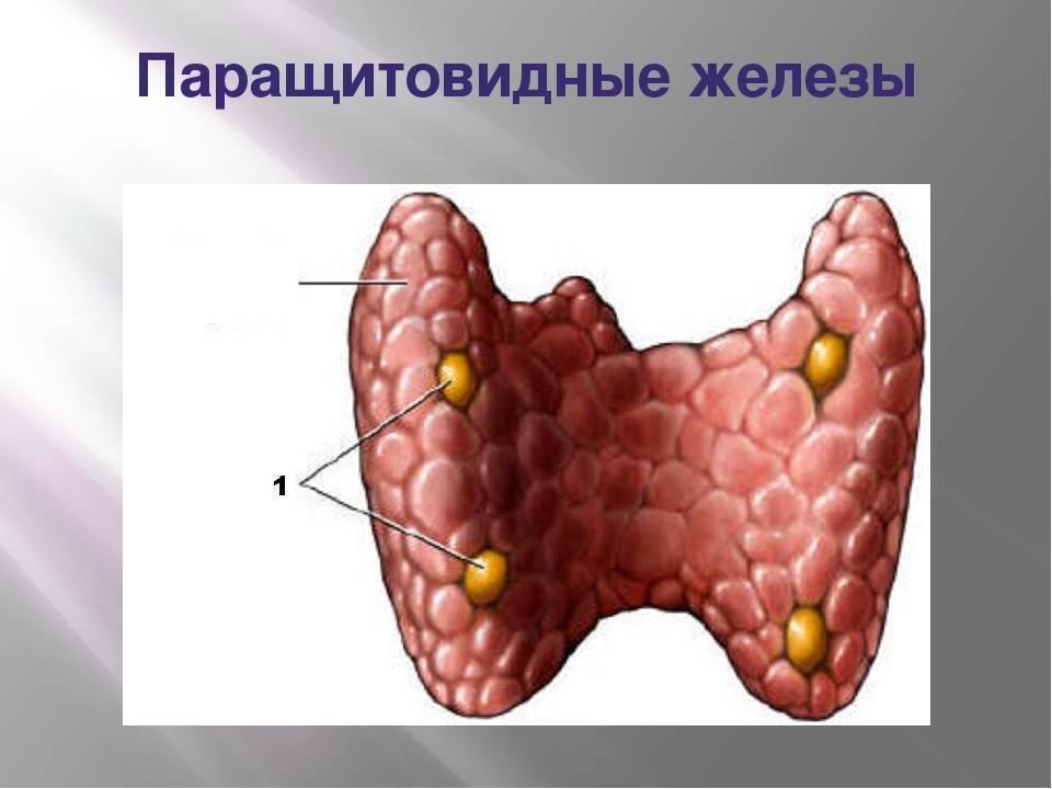 Причины возникновения аденомы паращитовидной железы и ее лечение