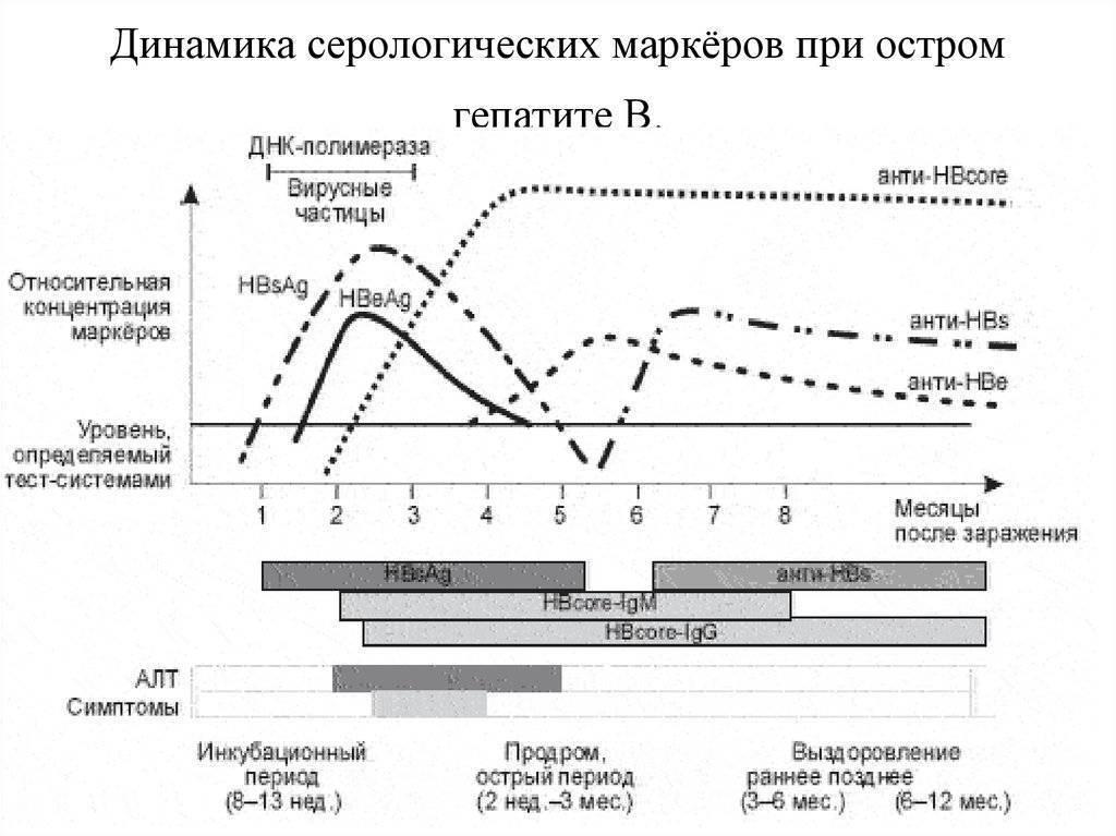 Анализ крови на маркеры гепатитов типа в и с