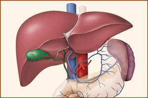 Токсическое поражение печени: причины, симптомы, методы лечения