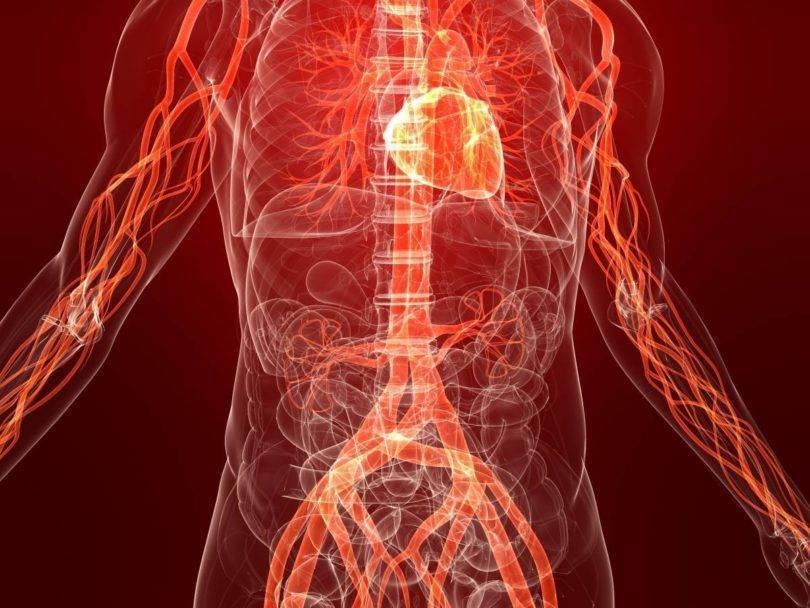 Атеросклероз сосудов легких — как с ним бороться