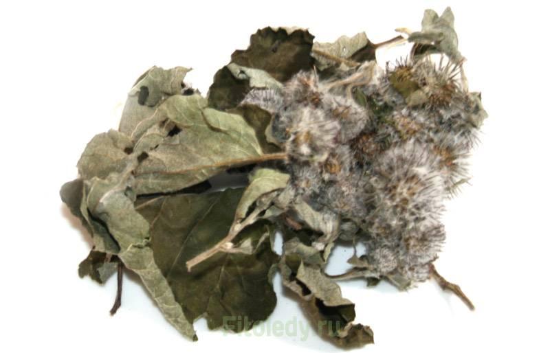 Лопух при лечении геморроя: листья, корень и соцветия