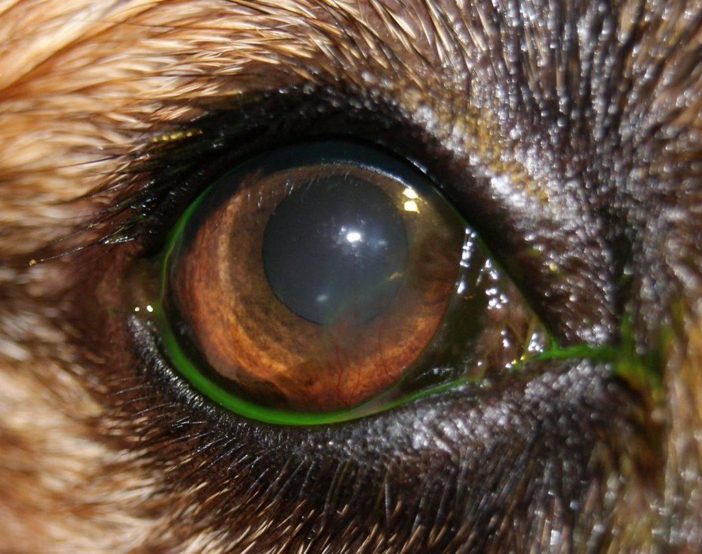 Как лечить кератит глаза в домашних условиях – 9 рецептов - народная медицина | природушка.ру