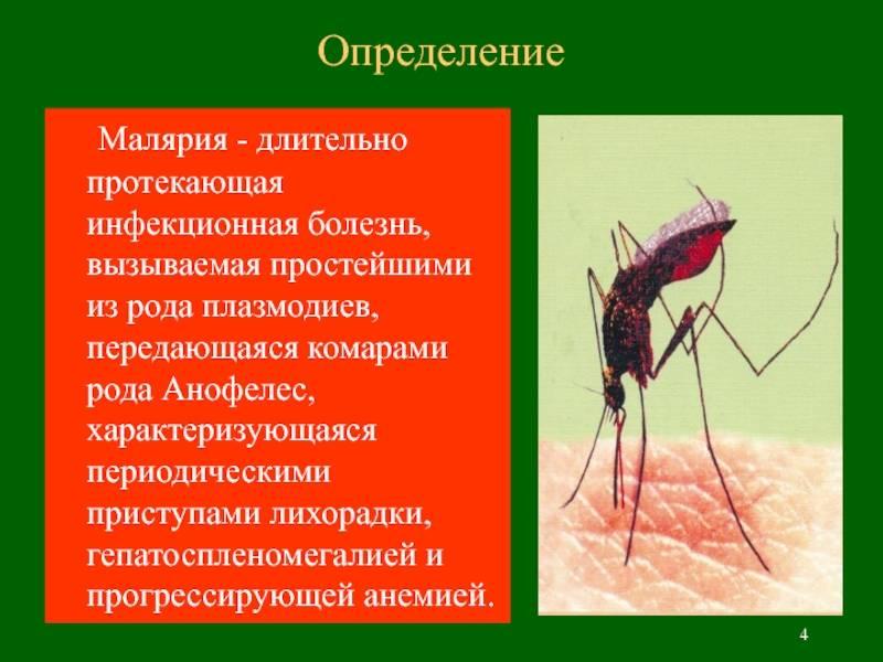 Как передается малярия: через укус и от человека к человеку