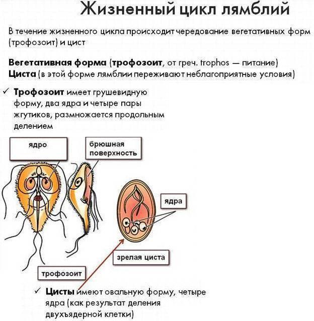 Лямблиоз у взрослых