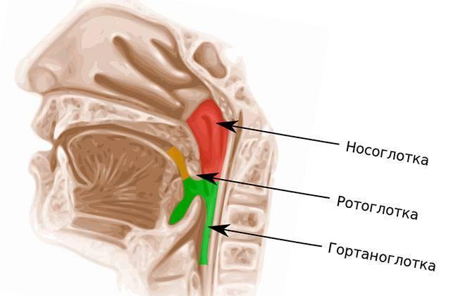Воспаление носоглотки – симптомы, лечение. что такое ринофарингит?