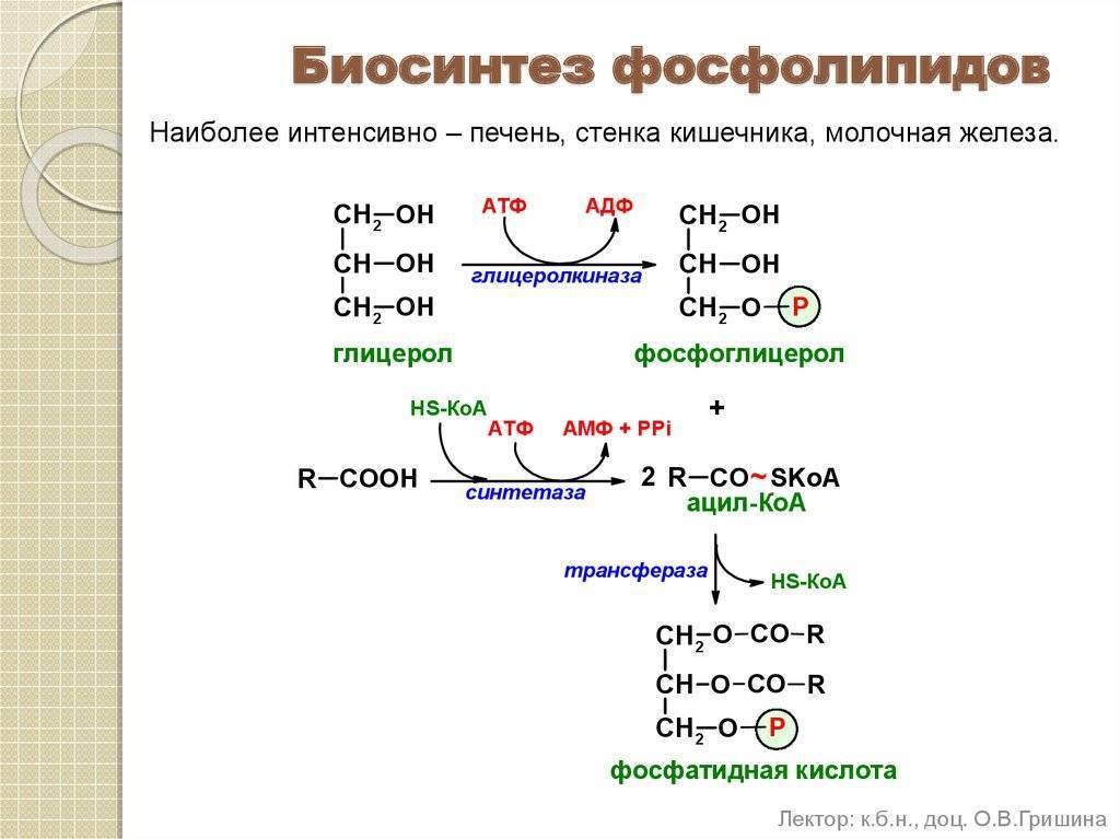 - нарушения обмена таг - биохимия